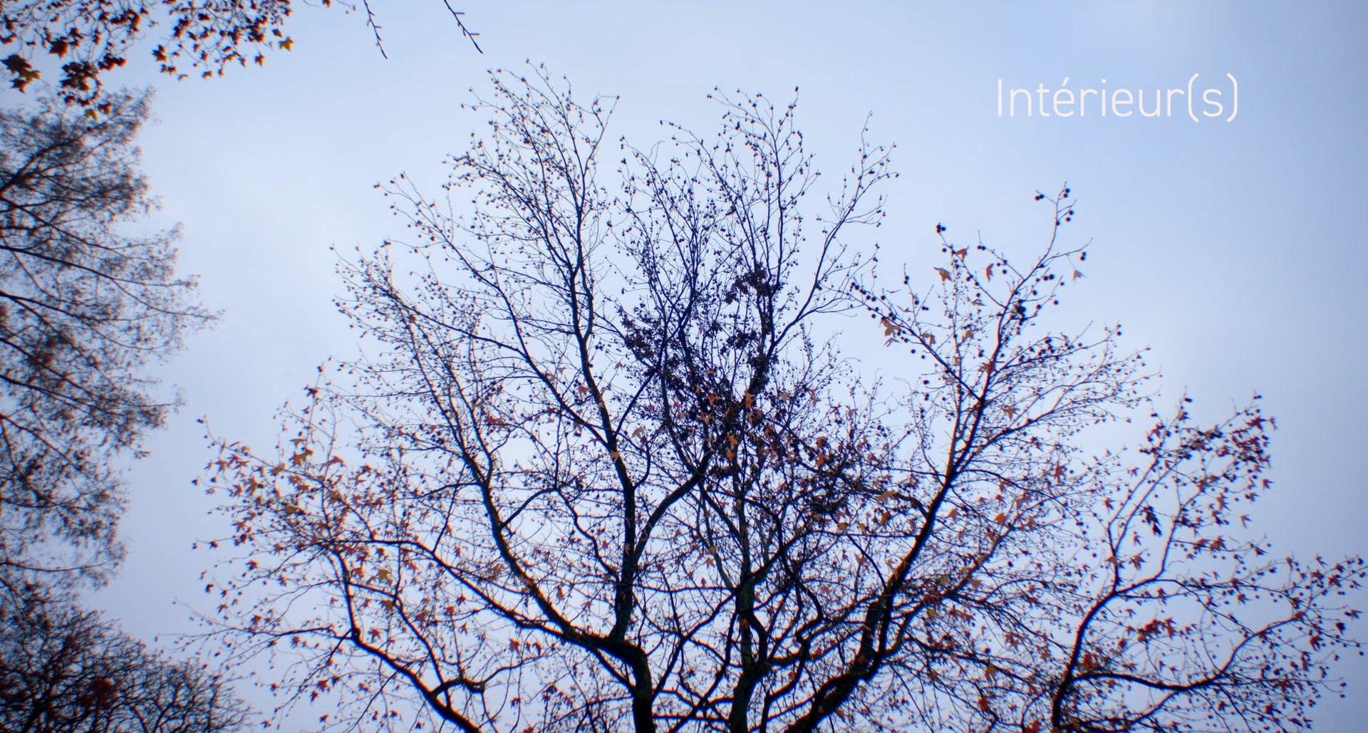 arbre-titre1.jpg